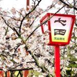 七田と桜と蔵見学