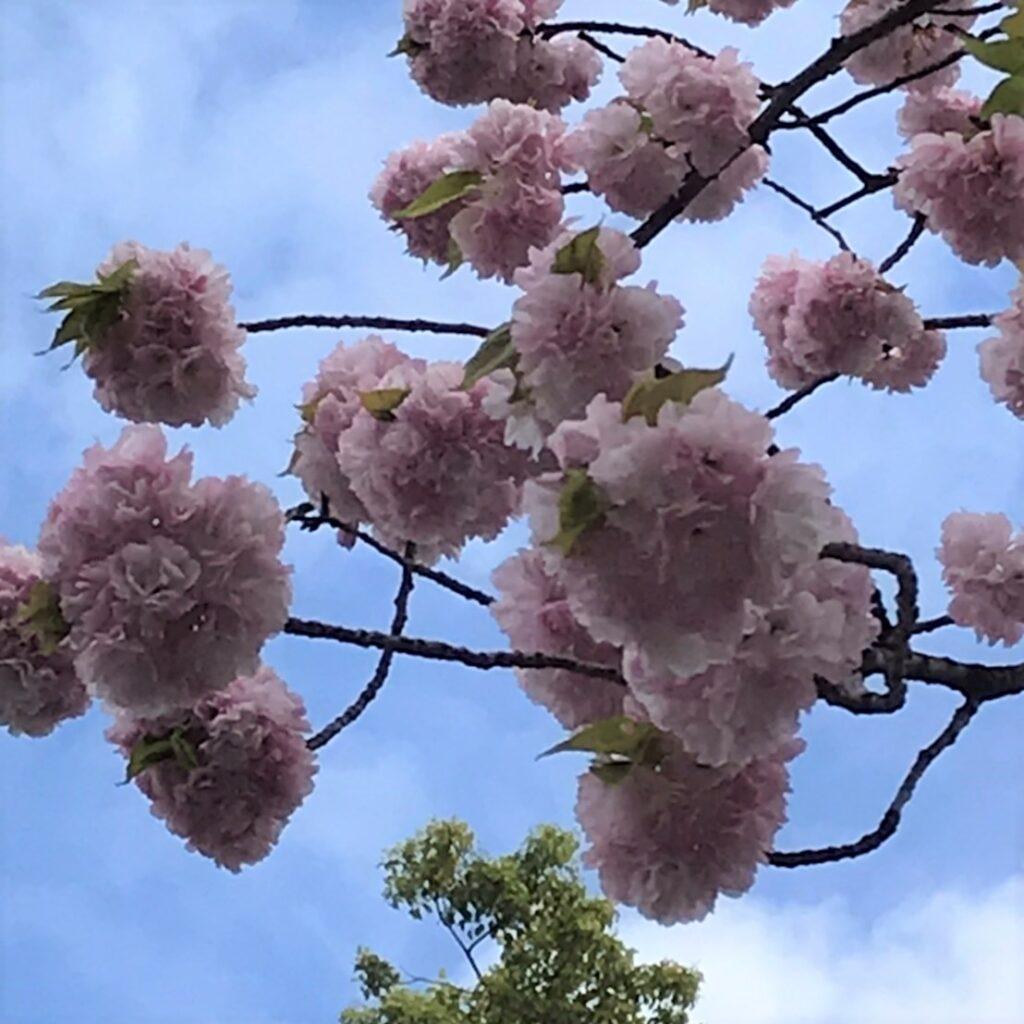 高島平、緑道の花